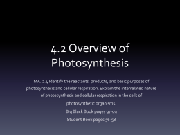 4.2 Overview of Photosynthesis