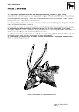Artiodáctilos - Antares Multimedia Productions