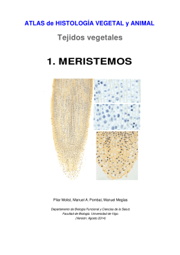 1 . meristemos - Atlas de Histología Vegetal y Animal