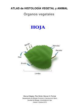 Hoja - Atlas de Histología Vegetal y Animal