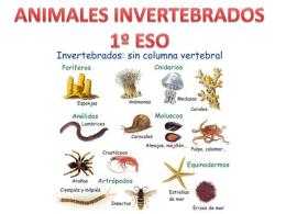 animalesinvertebrados1eso-131117150335