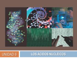 los ácidos nucléicos