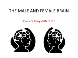 THE MALE AND FEMALE BRAIN