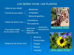 Los seres vivos. Las Plantas