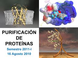 para qué necesitamos purificar proteínas?