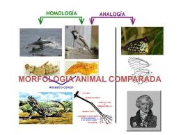 Introducción a la embriología comparada de los