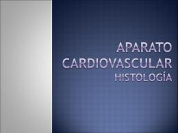 Aparato Cardiovascular histología