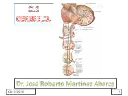 c11 cerebelo - doctormartinez