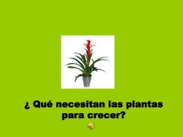 Qué necesitan las plantas para crecer?