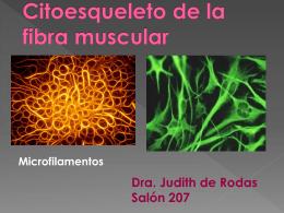Citoesqueleto de la fibra muscular