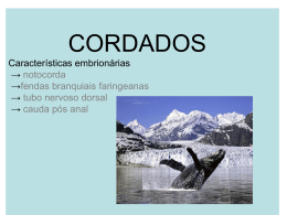 CORDADOS Características embrionárias → notocorda → tubo