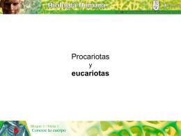 Procariotas y eucariotas