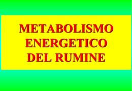metabolismo energetico del rumine - E