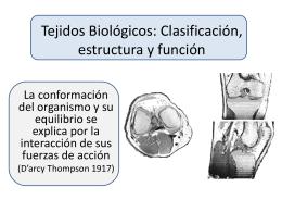 Tejidos Biológicos estructura y función