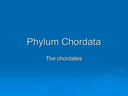 Chordata - WordPress.com