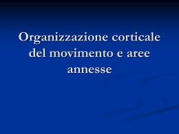 Organizzazione corticale del movimento e aree annesse