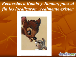 bambi-y-tambor-Diapositivas.pps