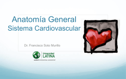 5. Sistema Cardiovascular